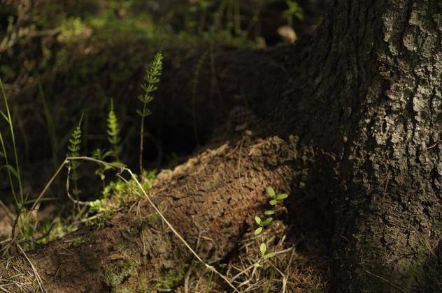 Här hittade jag ett underbart ljus och ett par blad som sticker upp. Kan det vara något att fota?