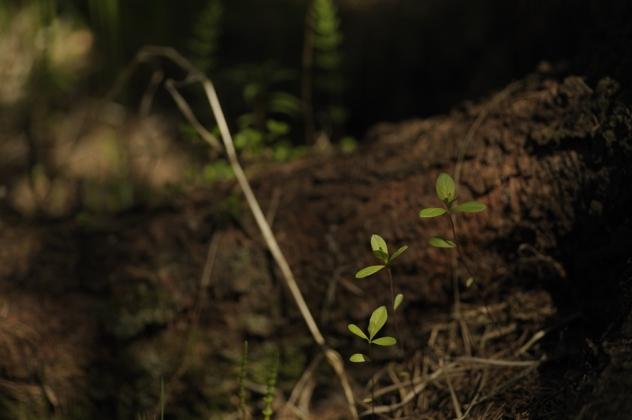 ...ett par blad som sticker upp. Kan det vara något att fota? Visst kan det vara spännande. Nu återstår det att komponera bilden.